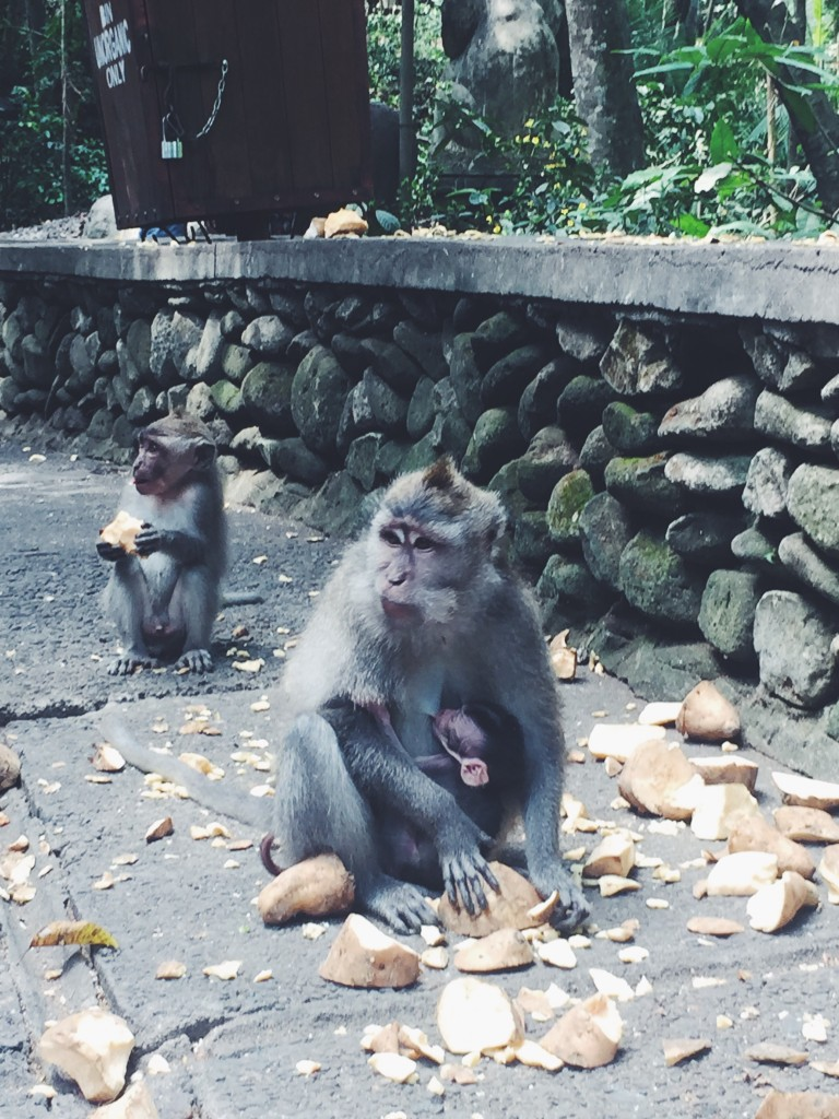 Breastfeeding in public is encouraged in Monkey Forest